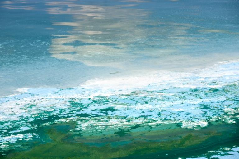blooming blue-green algae